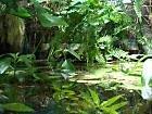 Mühlan Wasserpflanzen Pflanzenset für Regenwald Paludarium Terrarium