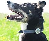 Sure Petcare Animo - Verhaltens- & Aktivitätsmonitor für Hunde