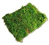Premium Terrarium Bodengrund Moos für Reptilien in Terrarien (1-Lage) Terra Substrat Untergrund Dekoration Moosmatten Moosplatten Plattenmoos echtes natur Moss