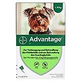 ADVANTAGE 40 Lösung f.Hunde bis 4 kg 4 St