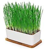 Pfotenolymp® Premium Katzengrasschale/Katzengras Set - Katzengras Schale aus Keramik - Pflanzset fertig mit Samen, Erde und Topf für Katzen - mit Keramikschale - DIY