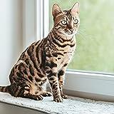 CanadianCat Company ® | Liegematte für Fensterbank | hellgrau | XXL 90 x 28 cm | Katzen | Fensterbett | Fensterkissen