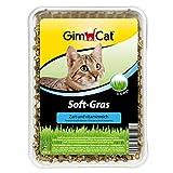 GimCat Soft-Gras - Zartes und vitaminreiches Katzengras mit schneller Aufzucht in nur 5 bis 8 Tagen - 1 Schale (1 x 100 g)