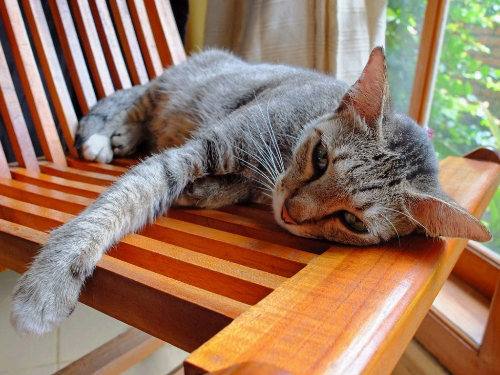 Durchfall-Katzen