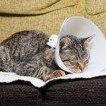 Katze kastrieren - die Kosten