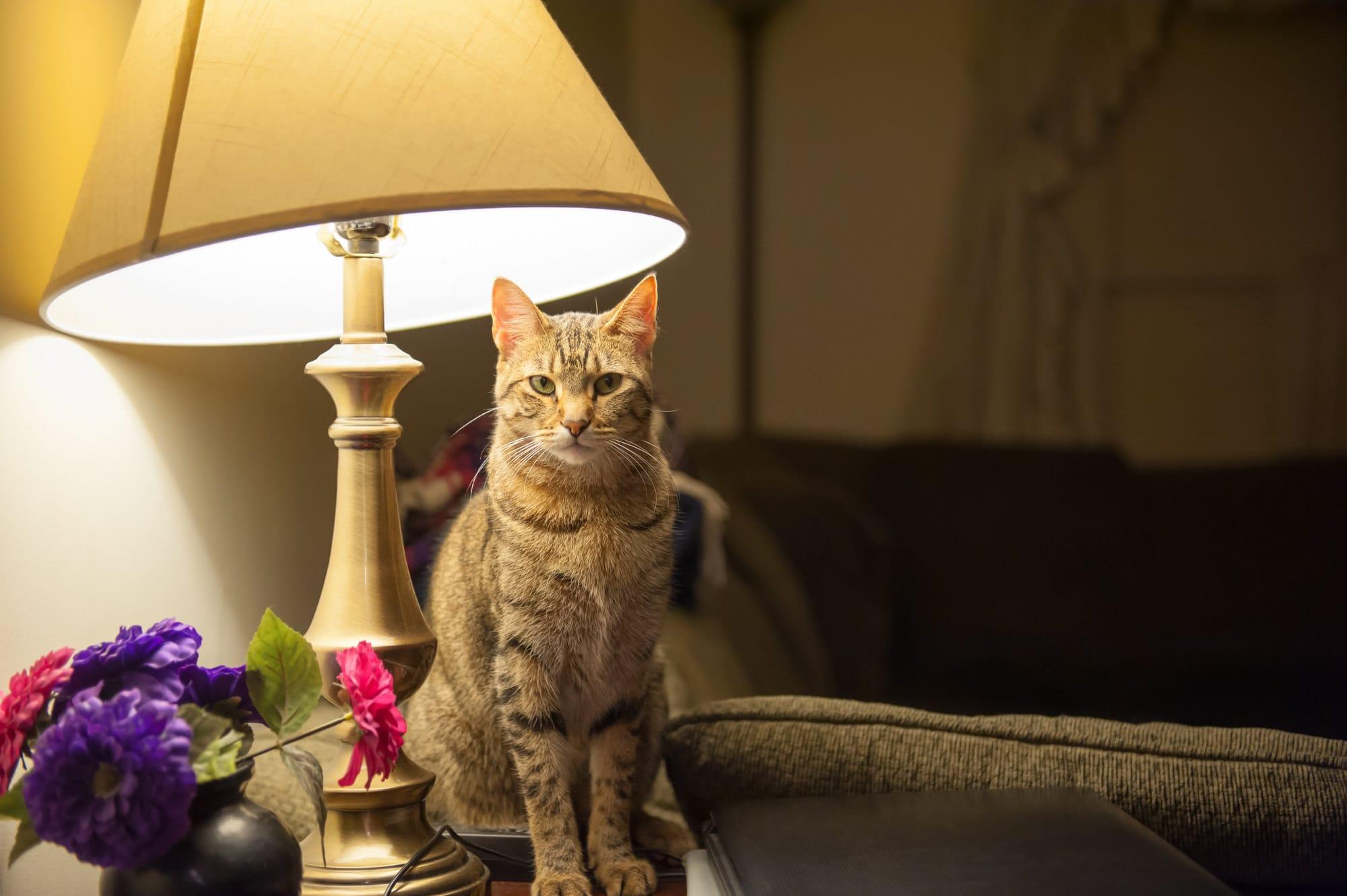 Katze miaut nachts