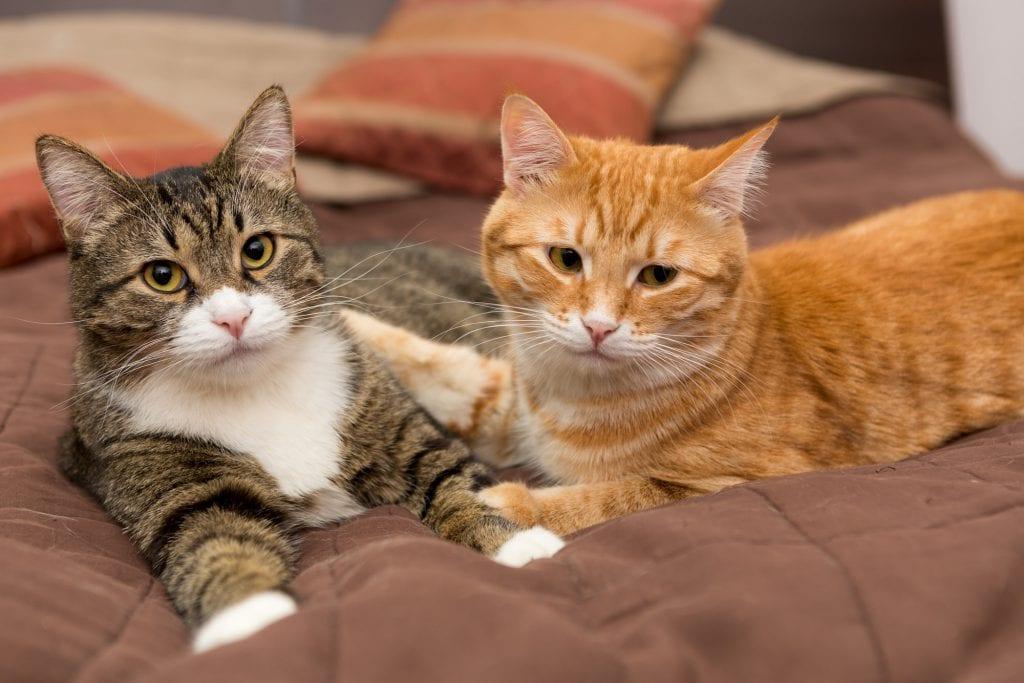 Katze-oder-Kater
