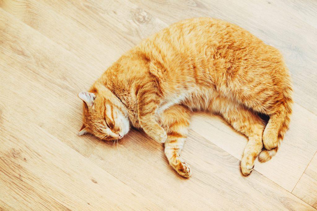 Katze-rollig