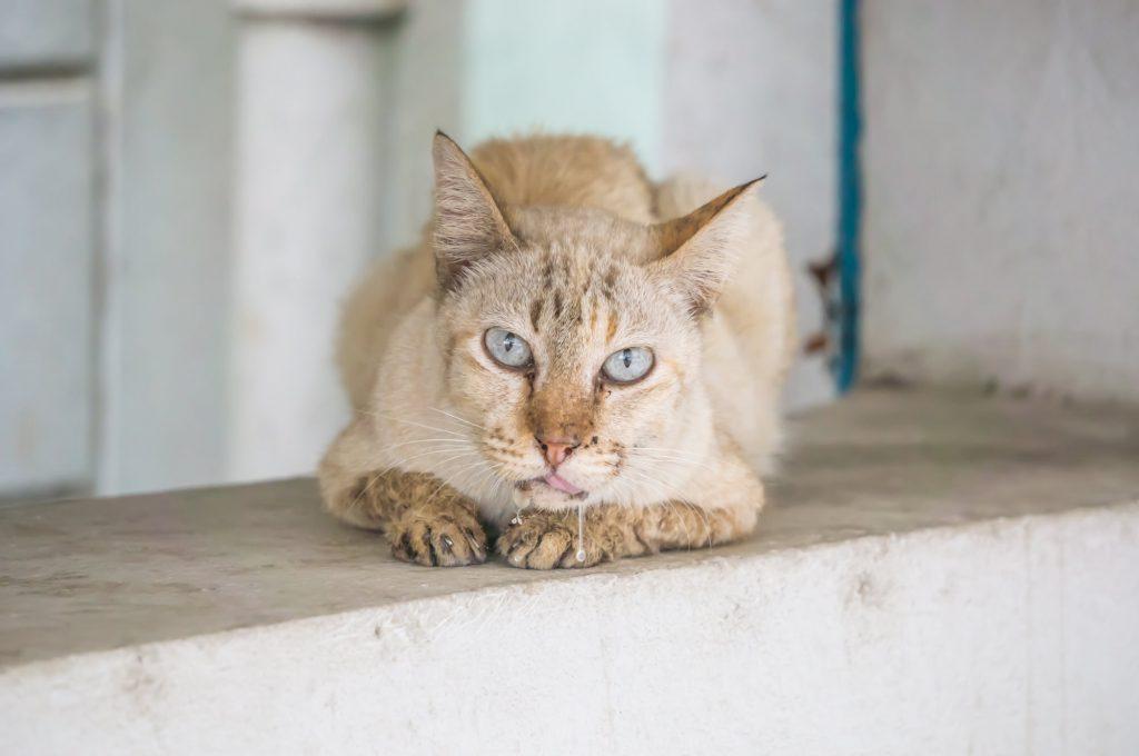 Katze-sabbert