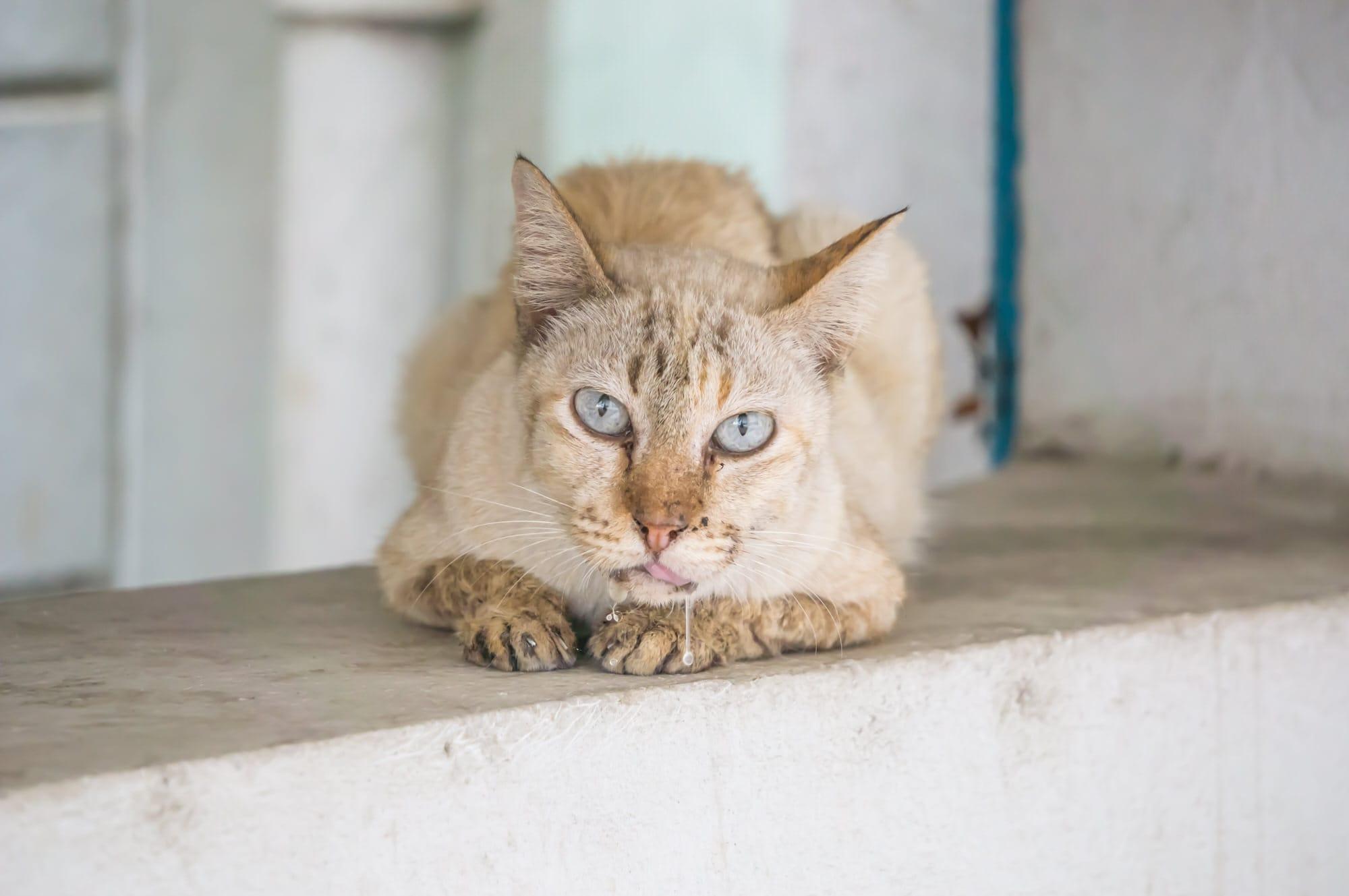 Katze sabbert