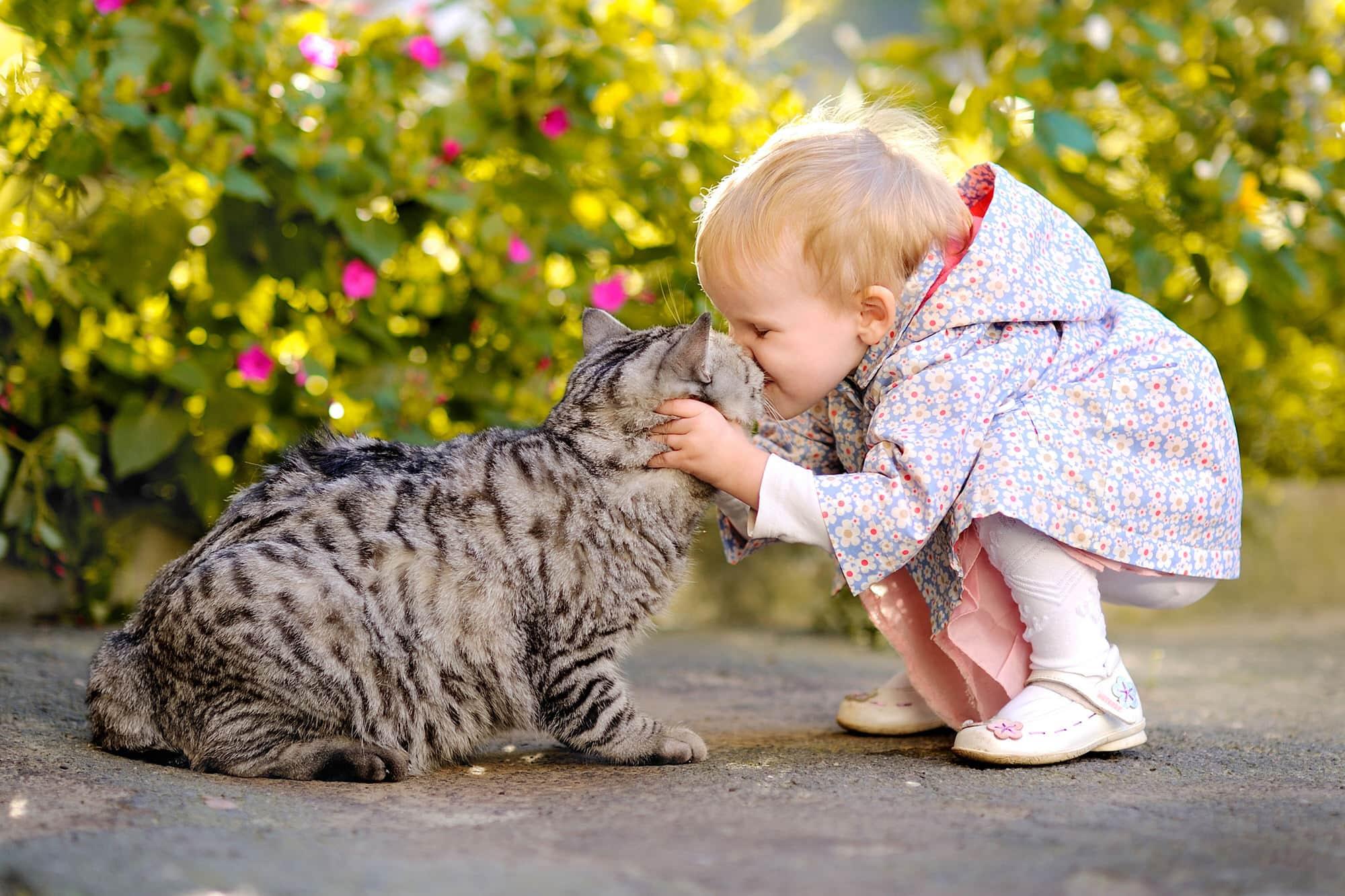 Wurmkur bei Katzen