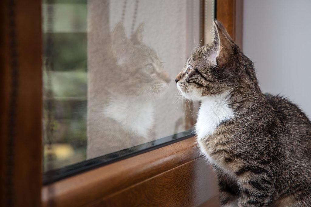 Katzen-alleine-halten