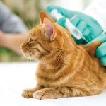 Katzen impfen