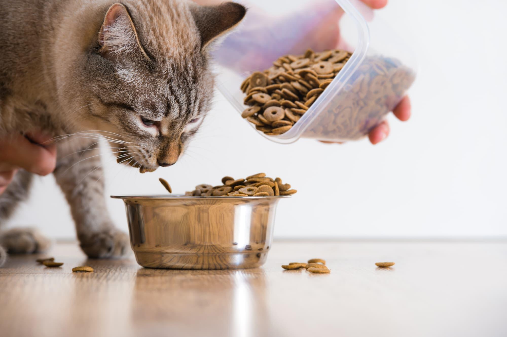 Katzen richtig füttern