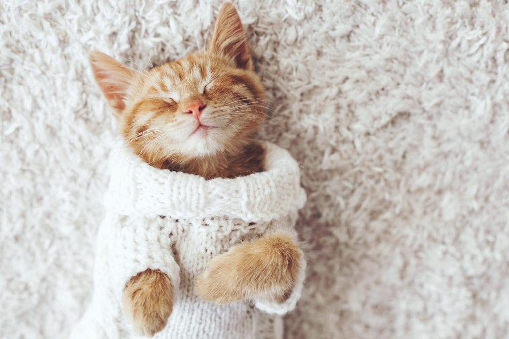 Katze-schnupfen