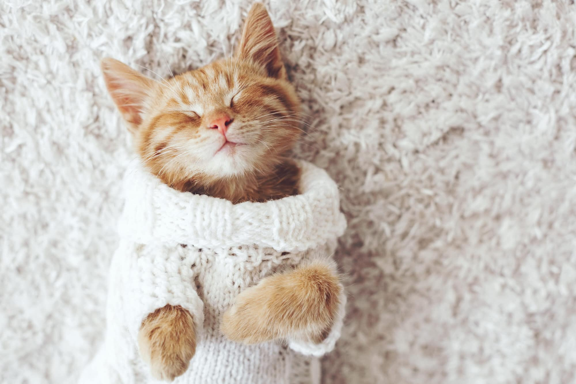 Katzen-Schnupfen