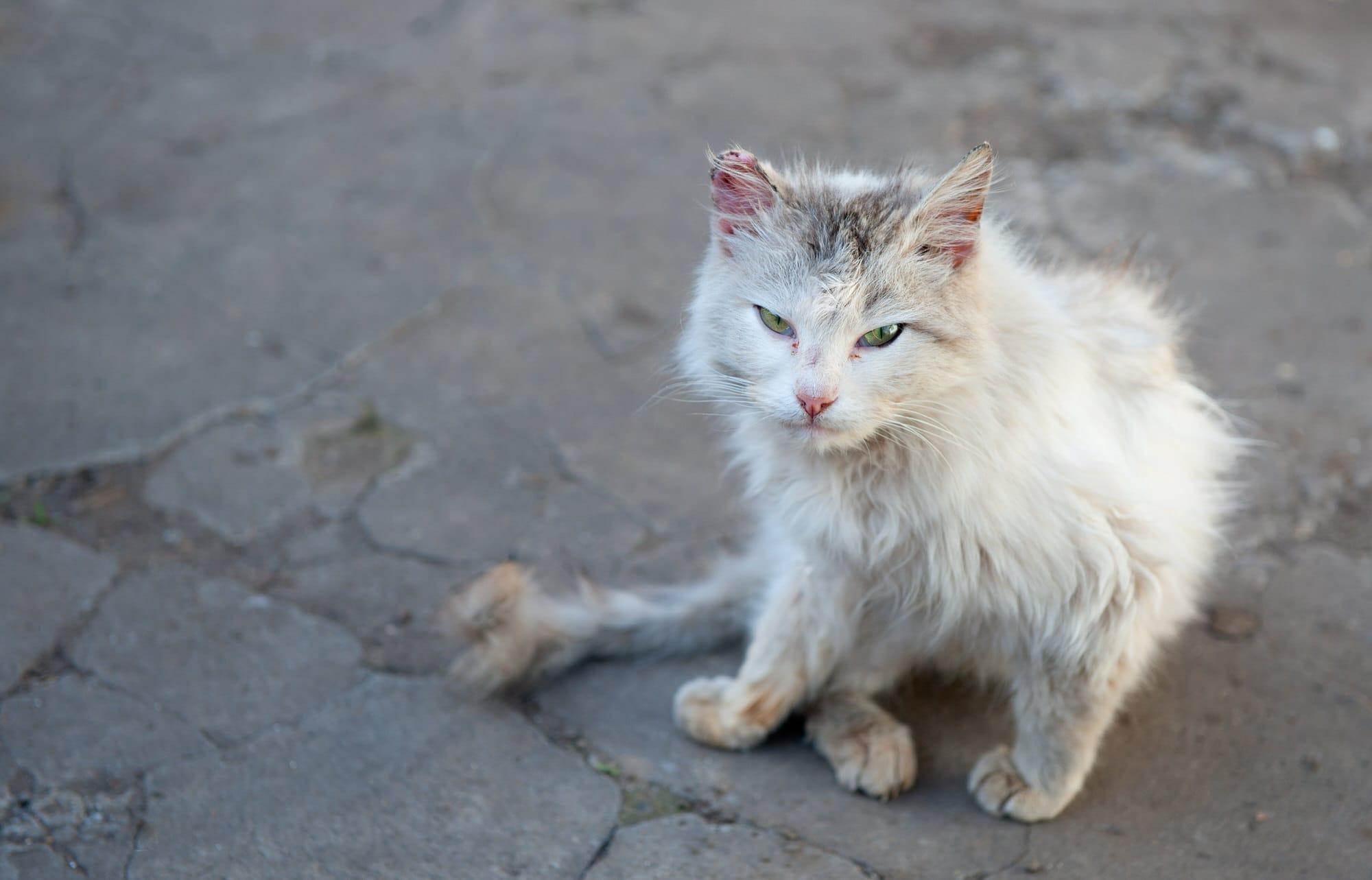 Katze verliert ihr Fell