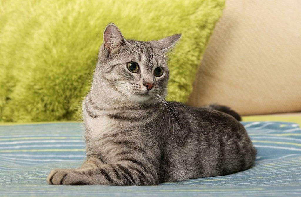 Katze-zittert