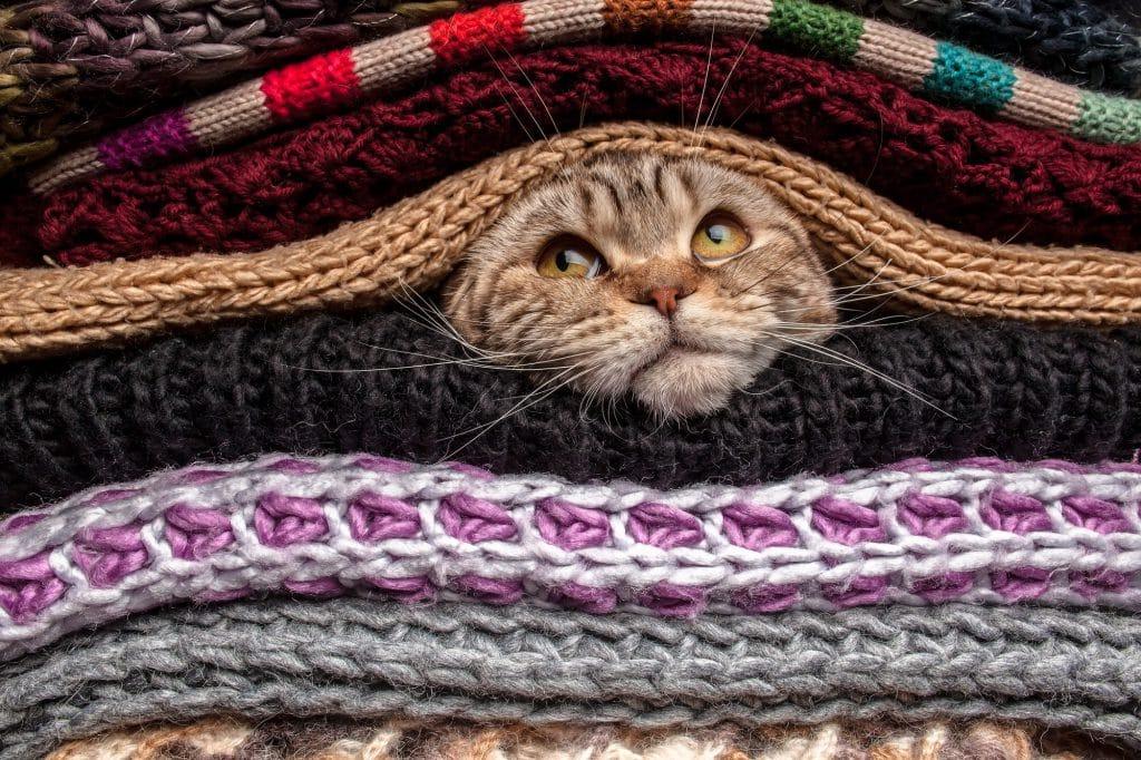 Katze-erkältet