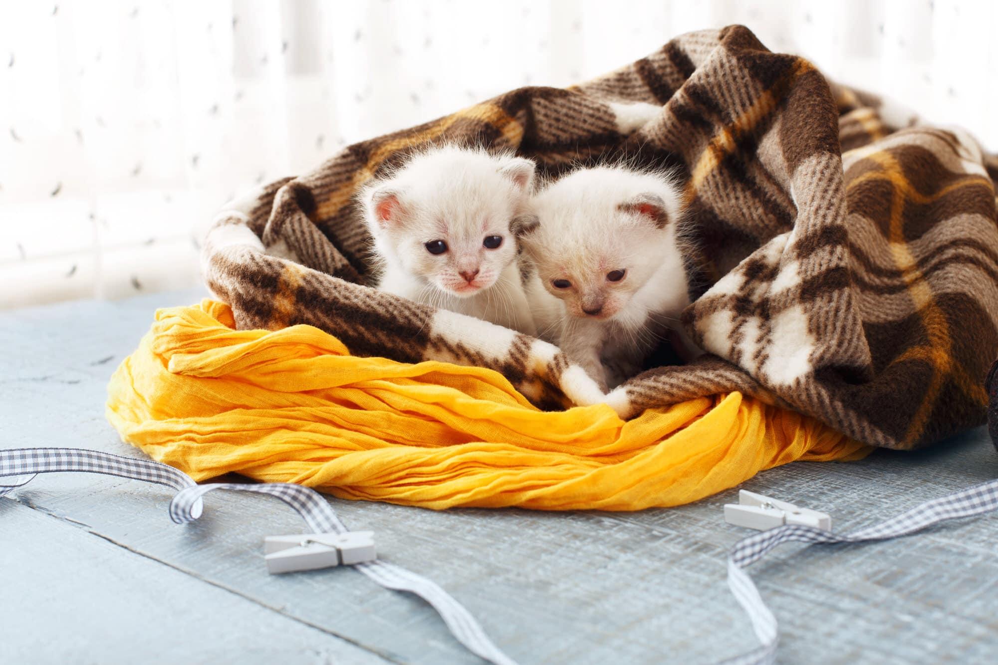 eine katze kaufen gro e entscheidung mit vielen folgen smart animals. Black Bedroom Furniture Sets. Home Design Ideas