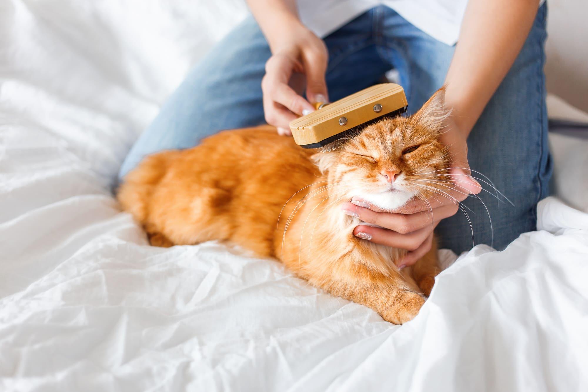 Katze putzt sich nicht