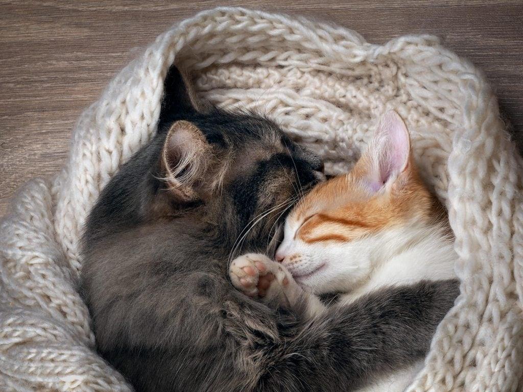 Katzen-zusammenführen