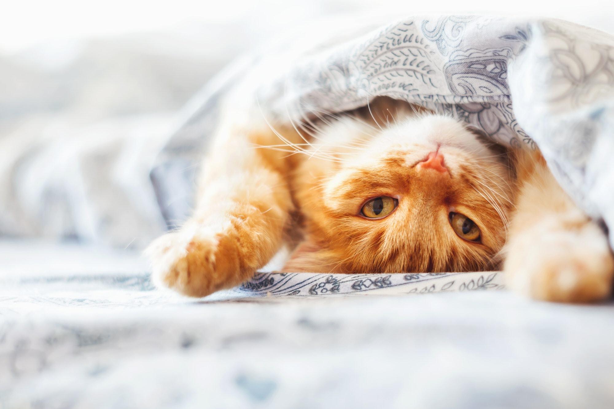 Katzenschnupfen-Symptome