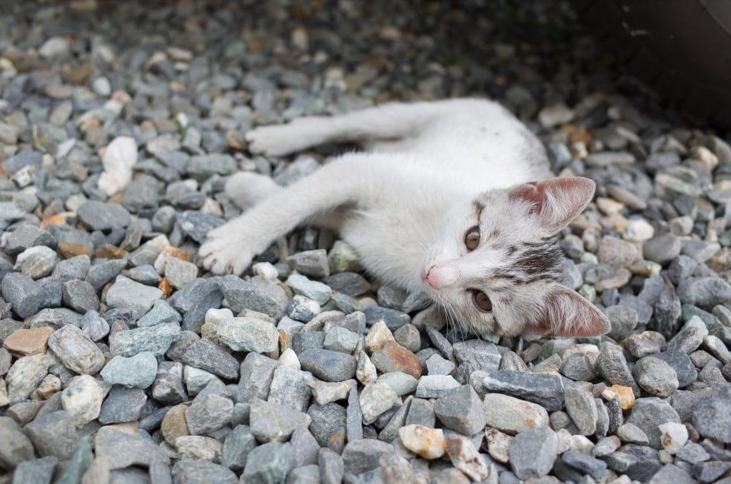 Durchfall-Babykatze