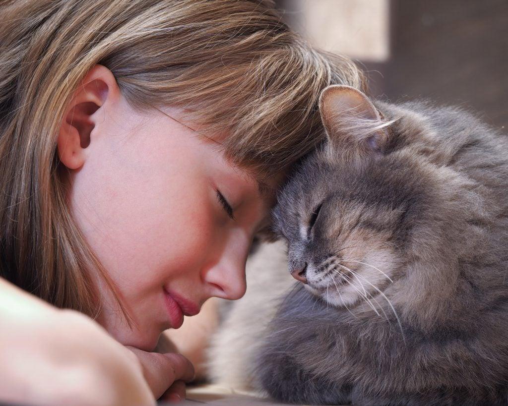 Katze-einschläfern