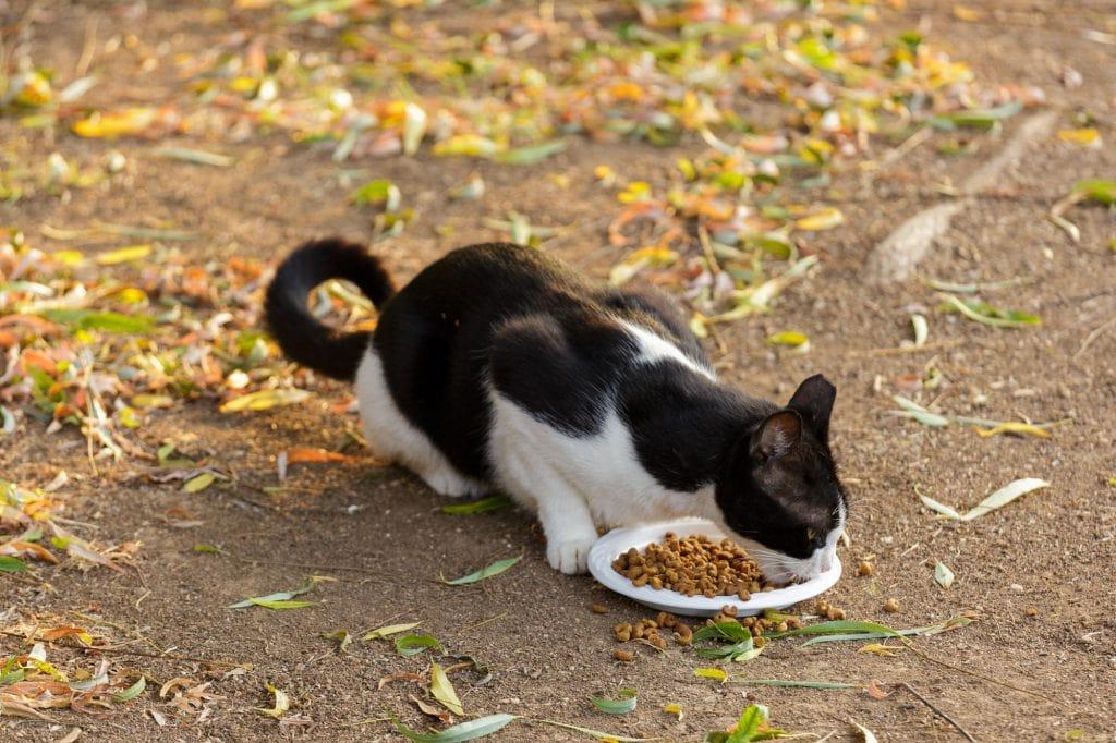 Katze-gefunden