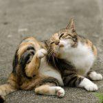 Parasiten bei Katzen
