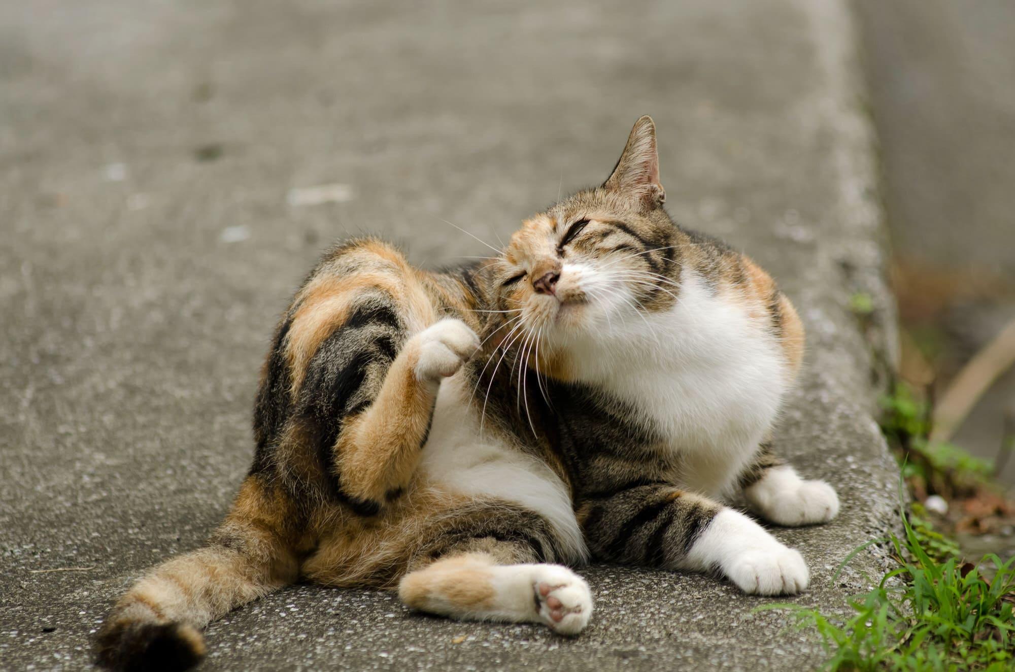 Katzen-Parasiten