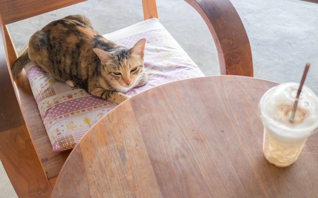 Katzencafés