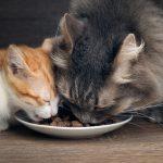 Kleine Katzenrassen