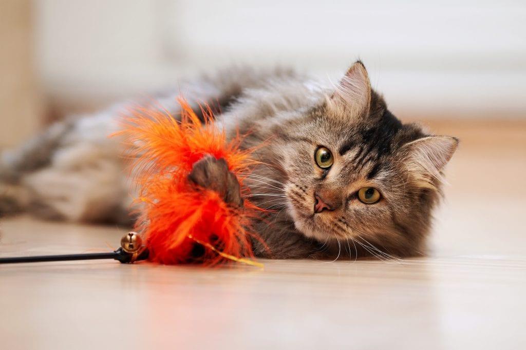 Lebenserwartung-Katzen