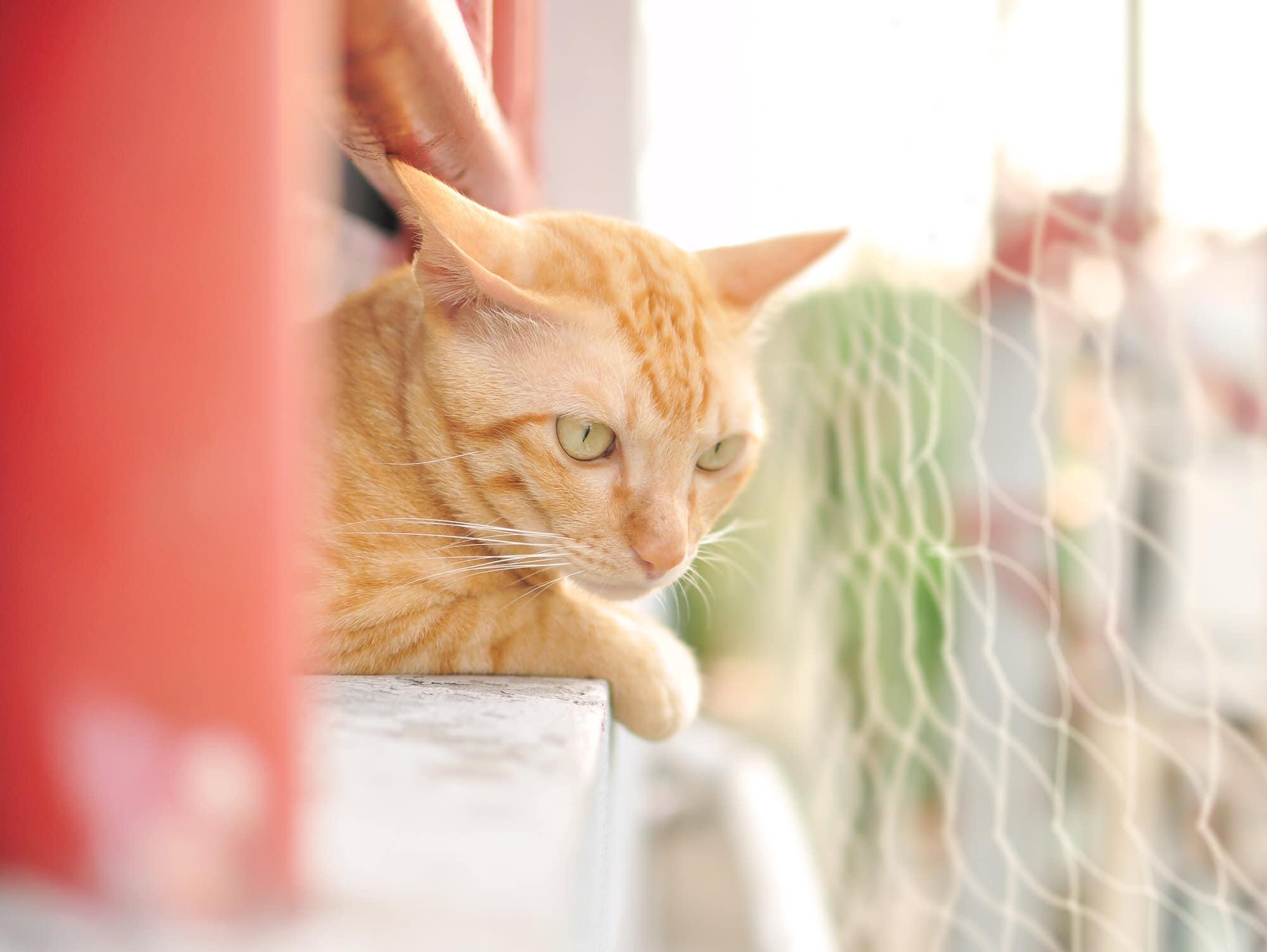 Katzennetz befestigen ▷ balkon katzensicher machen