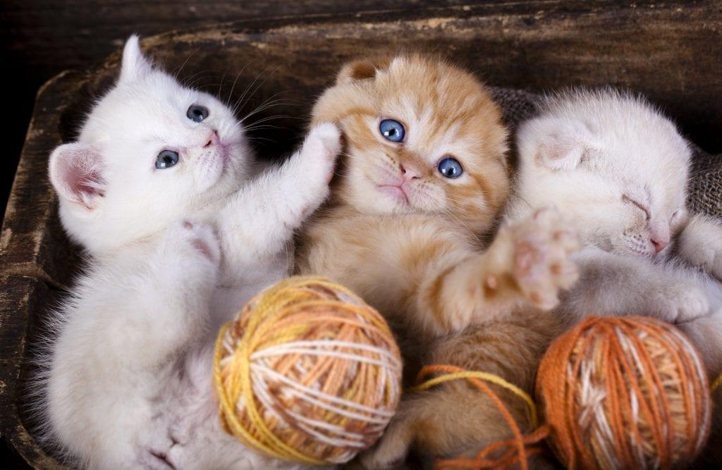 Katzenvermittlung