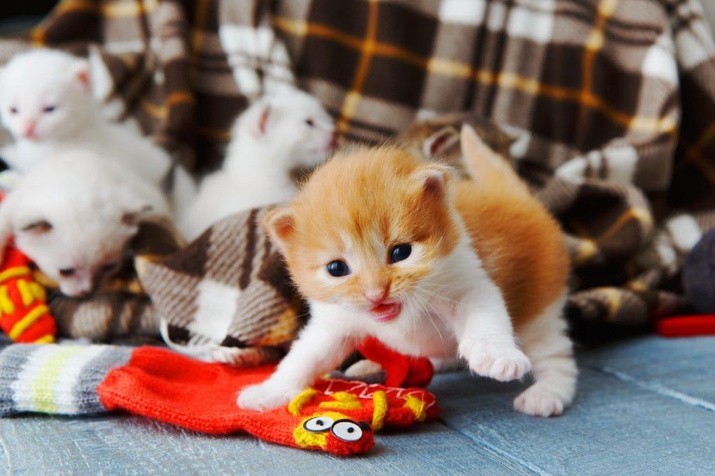 Babykatzen Kaufen Ein Kitten Zu Hause Willkommen Heißen Smart