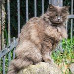 FURminator-Katze