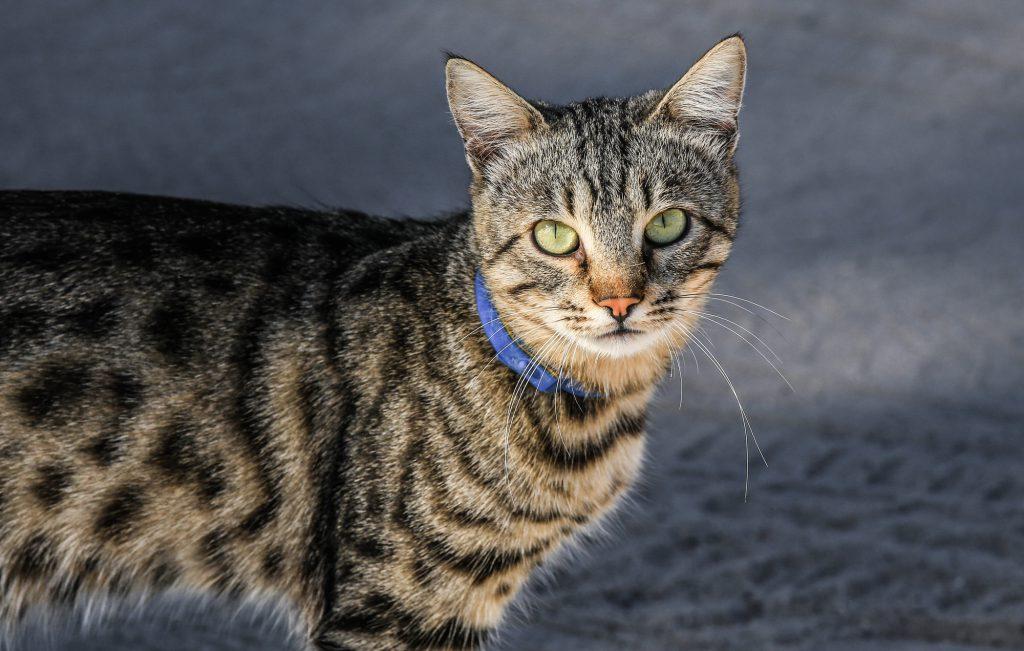Die Katze Stinkt Unangenehm Woran Kann Es Liegen Smart Animals