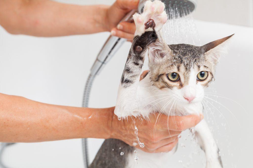 Katzen-baden