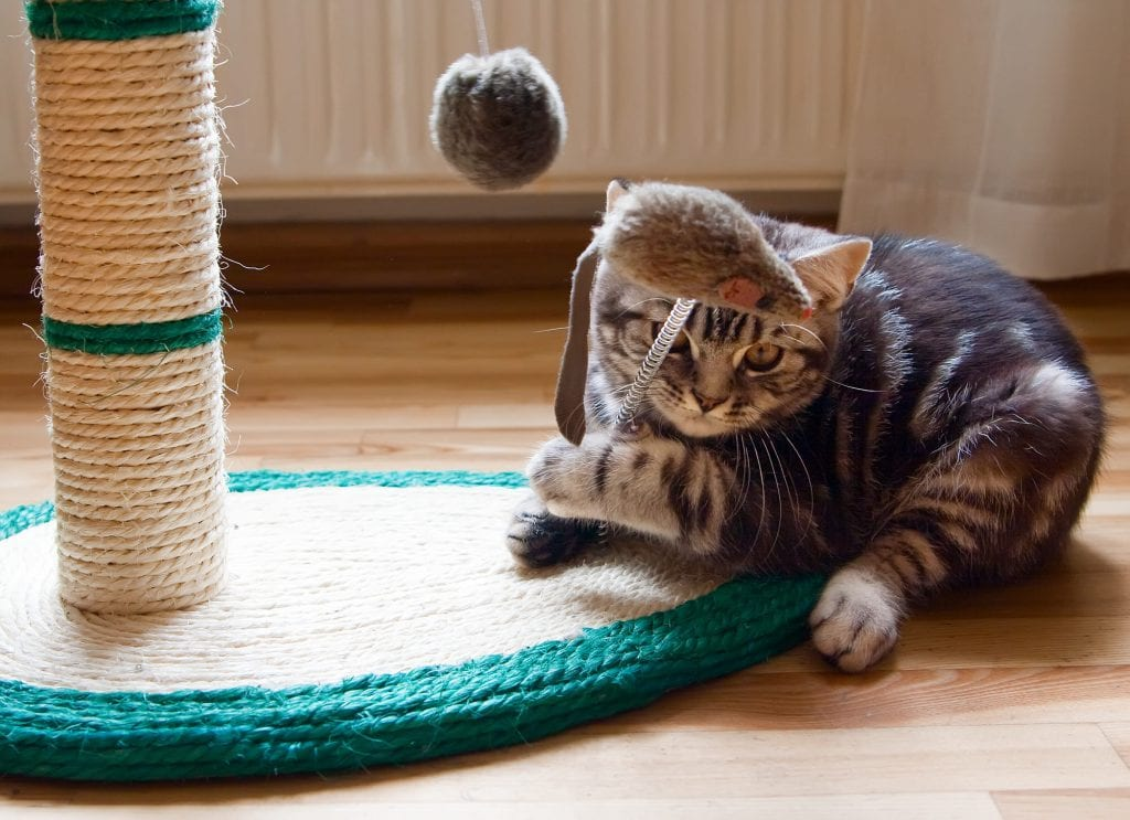 Katzen-beschäftigen