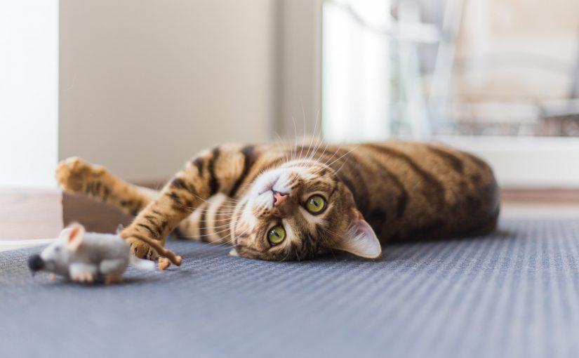 Baldrian für Katzen